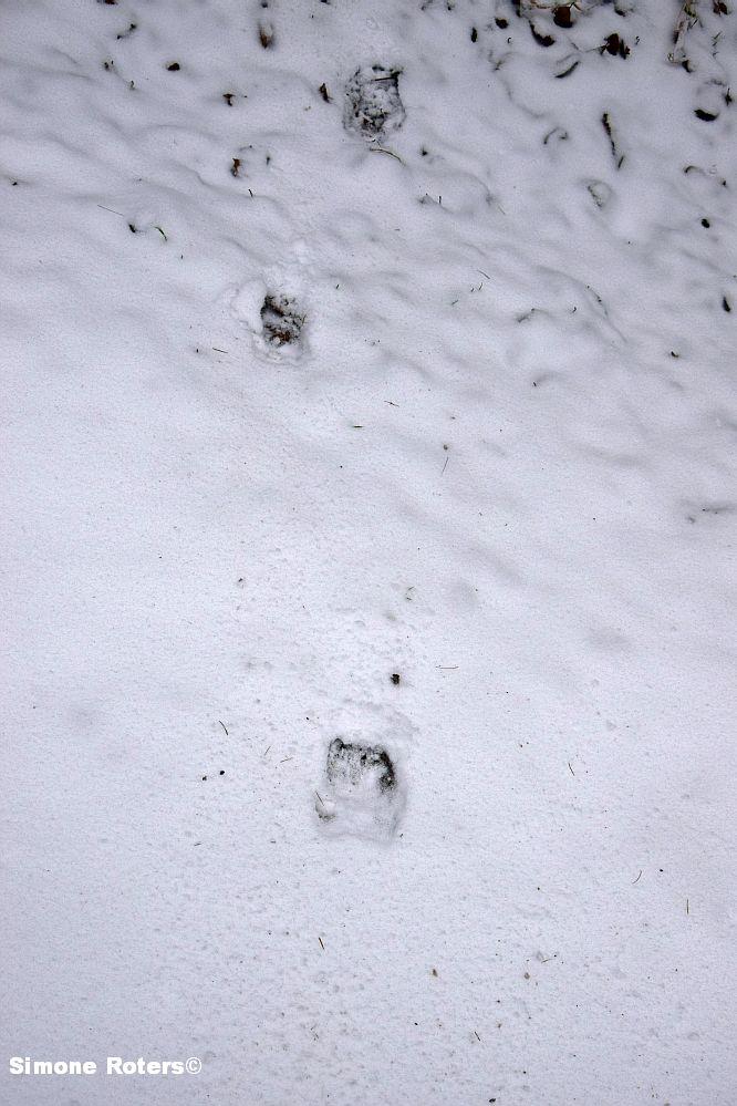 BauchlandungSchwein02.jpg